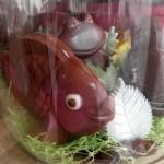 Terrarium de poissons et grenouille
