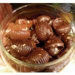 Escargots pralinés noir et lait